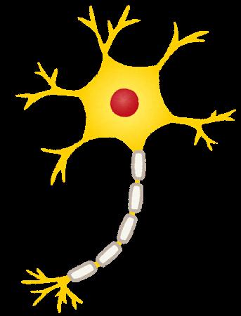 ニューロン 神経細胞